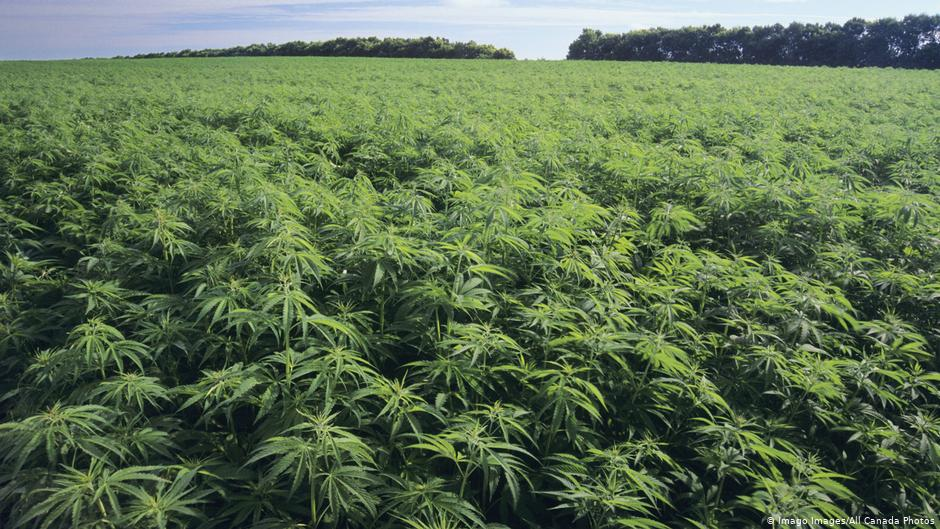 Hemp and medicinal properties