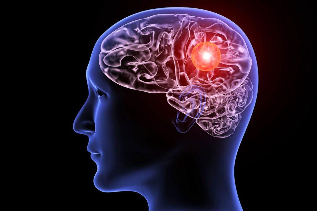 The secret of the human brain