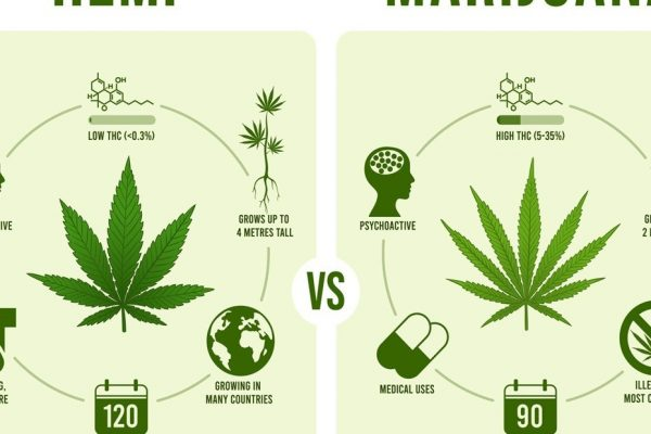 How is hemp different from marijuana?